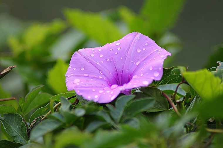 purple petal flower surrounded by green plants during daytime